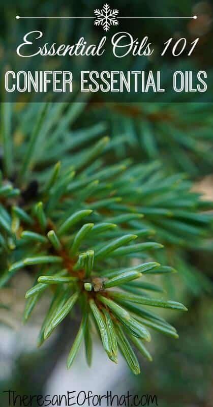 Conifer Essential Oils- Essential Oils 101