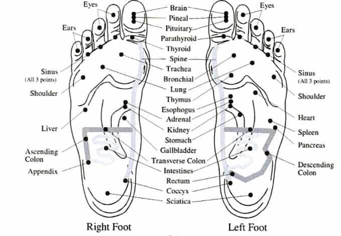 feet vita flex points