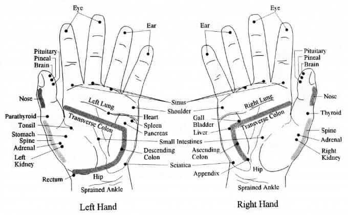 hand vita flex points