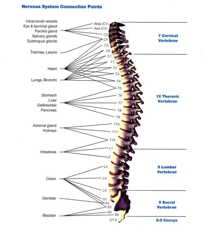 spine vita flex points