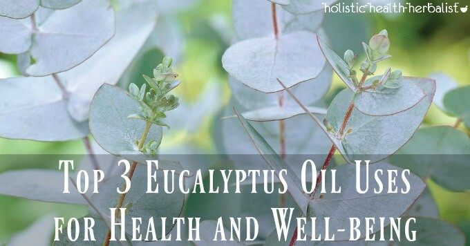 Top 3 Eucalyptus Oil Uses for Health and Well-being and Eucalyptus benefits