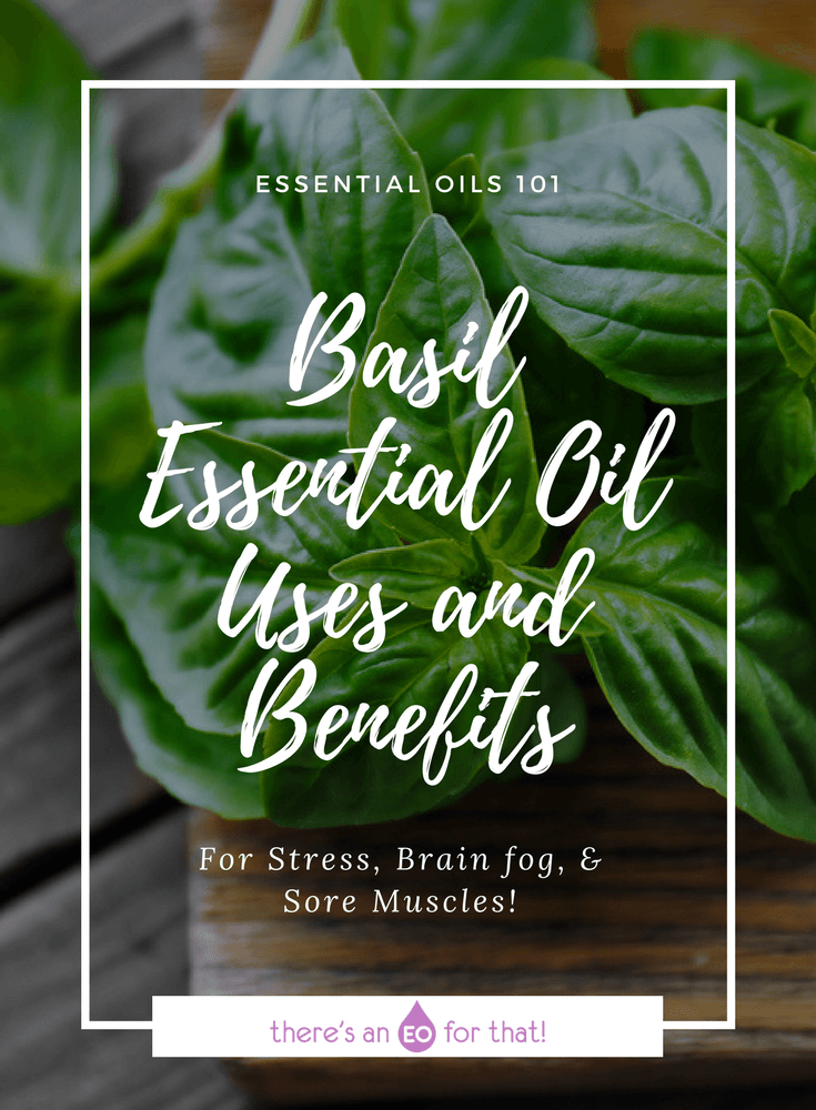 Basil Essential Oil Uses and Benefits - Learn how to use basil essential oil for mental fatigue, emotional support, cold and flu, and post-workout muscle soreness.