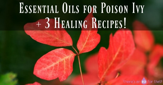 Essential Oils for Poison Ivy + 3 Healing Recipes!