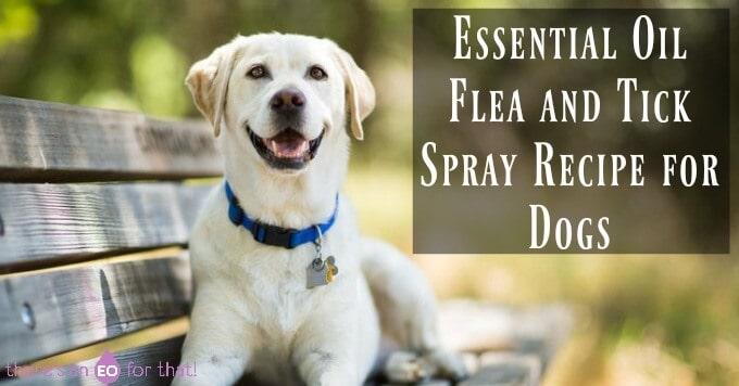 Essential Oil Flea and Tick Spray Recipe for Dogs