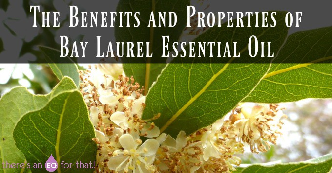 The Benefits and Properties of Bay Laurel Essential Oil