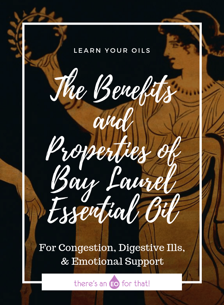 The Benefits and Properties of Bay Laurel Essential Oil - Bay laurel has an intoxicating aroma that has long been used as a flavoring in cooking, a fragrance in soaps, and as an excellent remedy for respiratory illness.