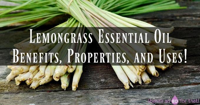 Lemongrass Essential Oil - Benefits, Properties, and Uses! - Bundles of fresh lemongrass