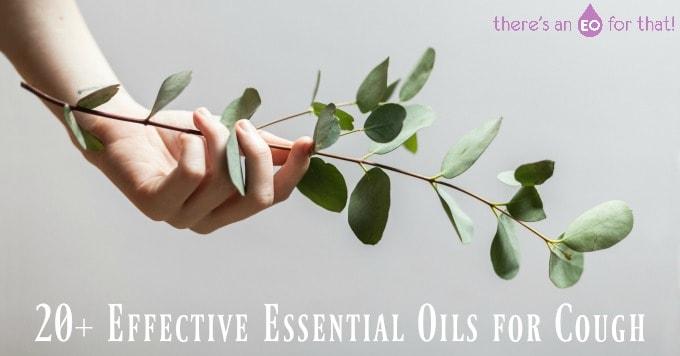 20+ Effective Essential Oils for Cough - Photo of eucalyptus sprig
