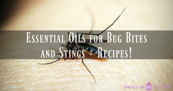 Essential Oils for Bug Bites and Stings + Recipes!