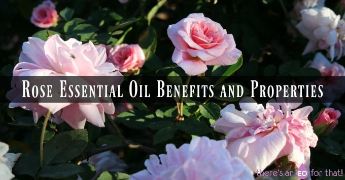 Rose Essential Oil Benefits and Properties